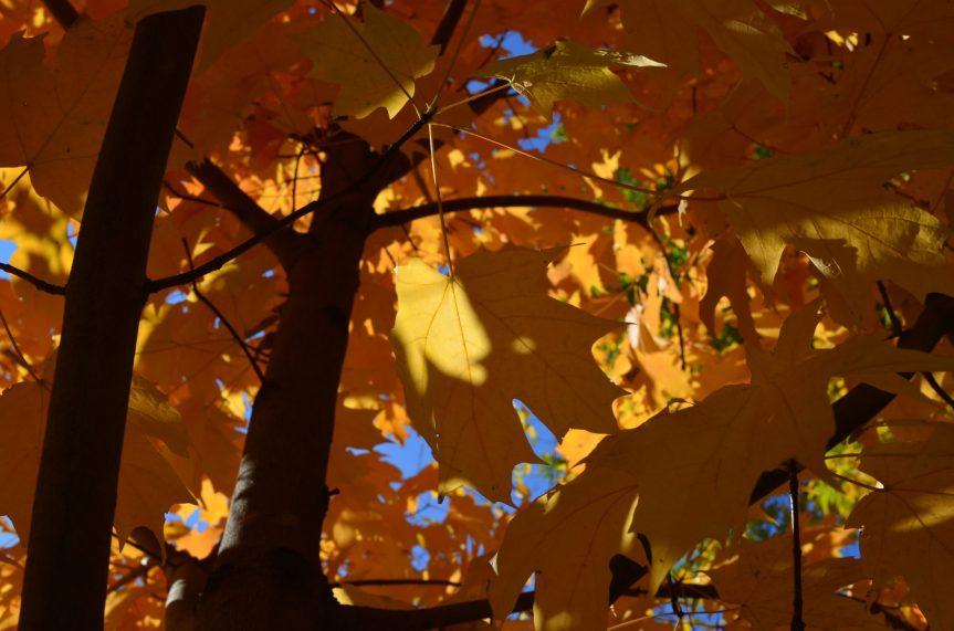 Central Park Fall 2013 7