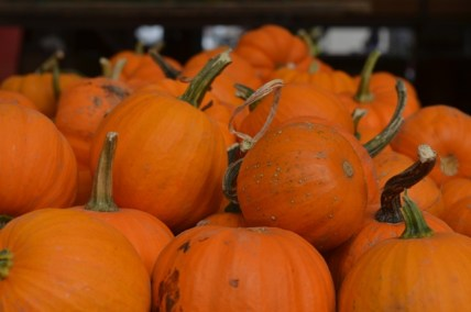 Pumpkins in New York City
