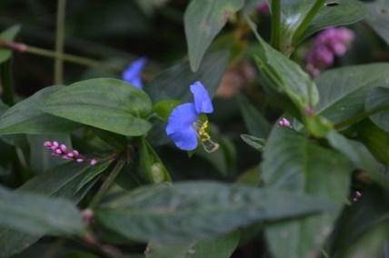 Violet Flower in Riverside Park