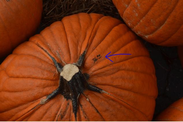 A $36 pumpkin in Manhattan