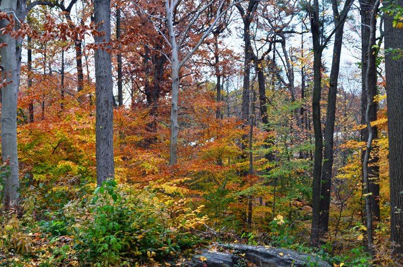 Bronx Botanical Garden 5