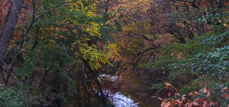 Bronx Botanical Garden 3