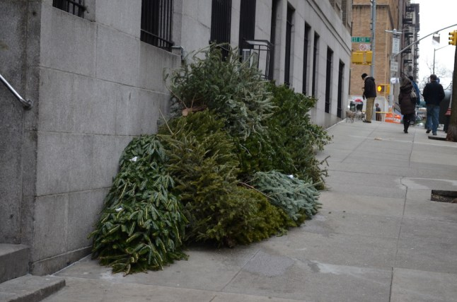 After Christmas Trees