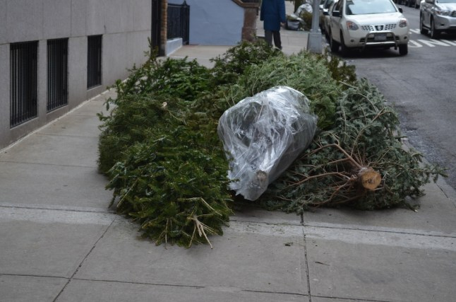 Life of a NYC Christmas Tree