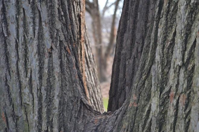 Framed Tree in Central Park