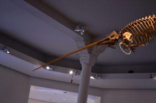 Dinosaur with Long Tusk