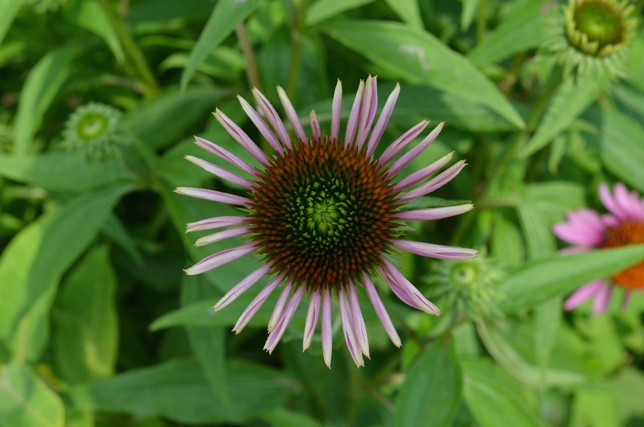 Flower in Central Park