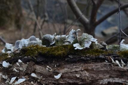 Fungi in Central Park