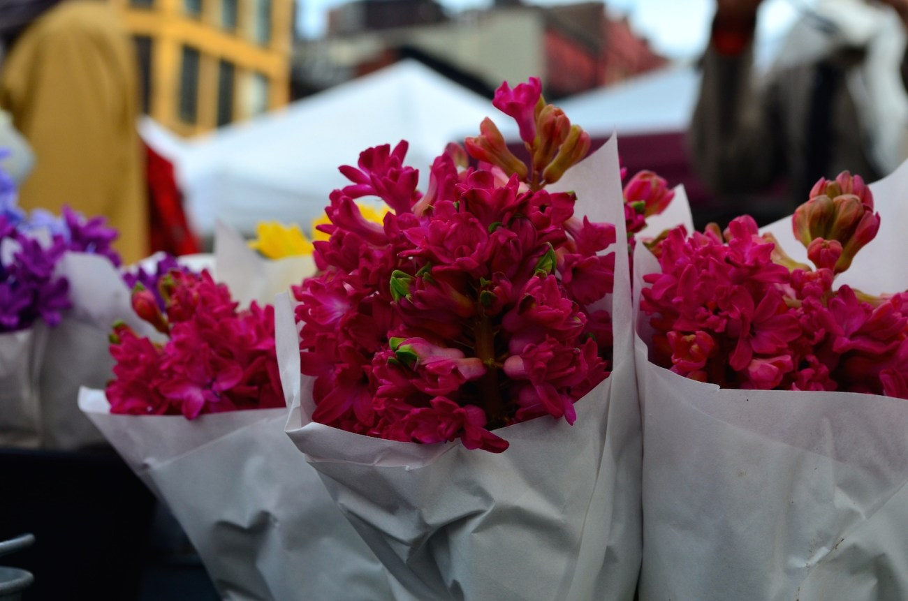 Pink Spring Flowers at the Farmers Market