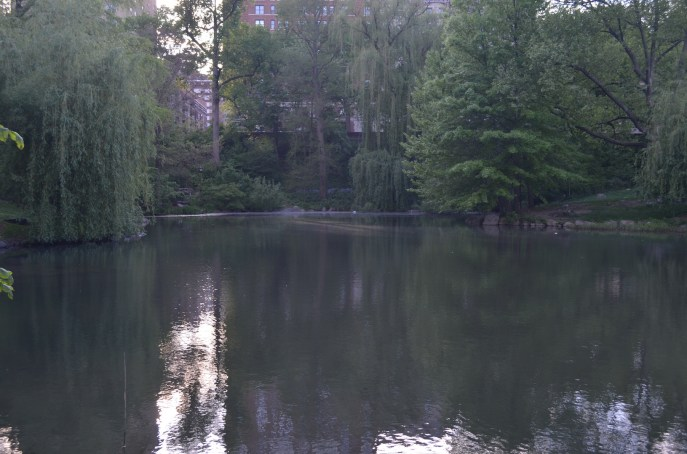 Trees Over The Pool In Central Park