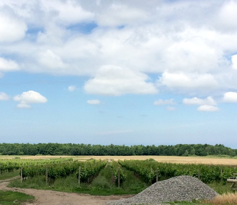 Niagara Falls Region Vineyards