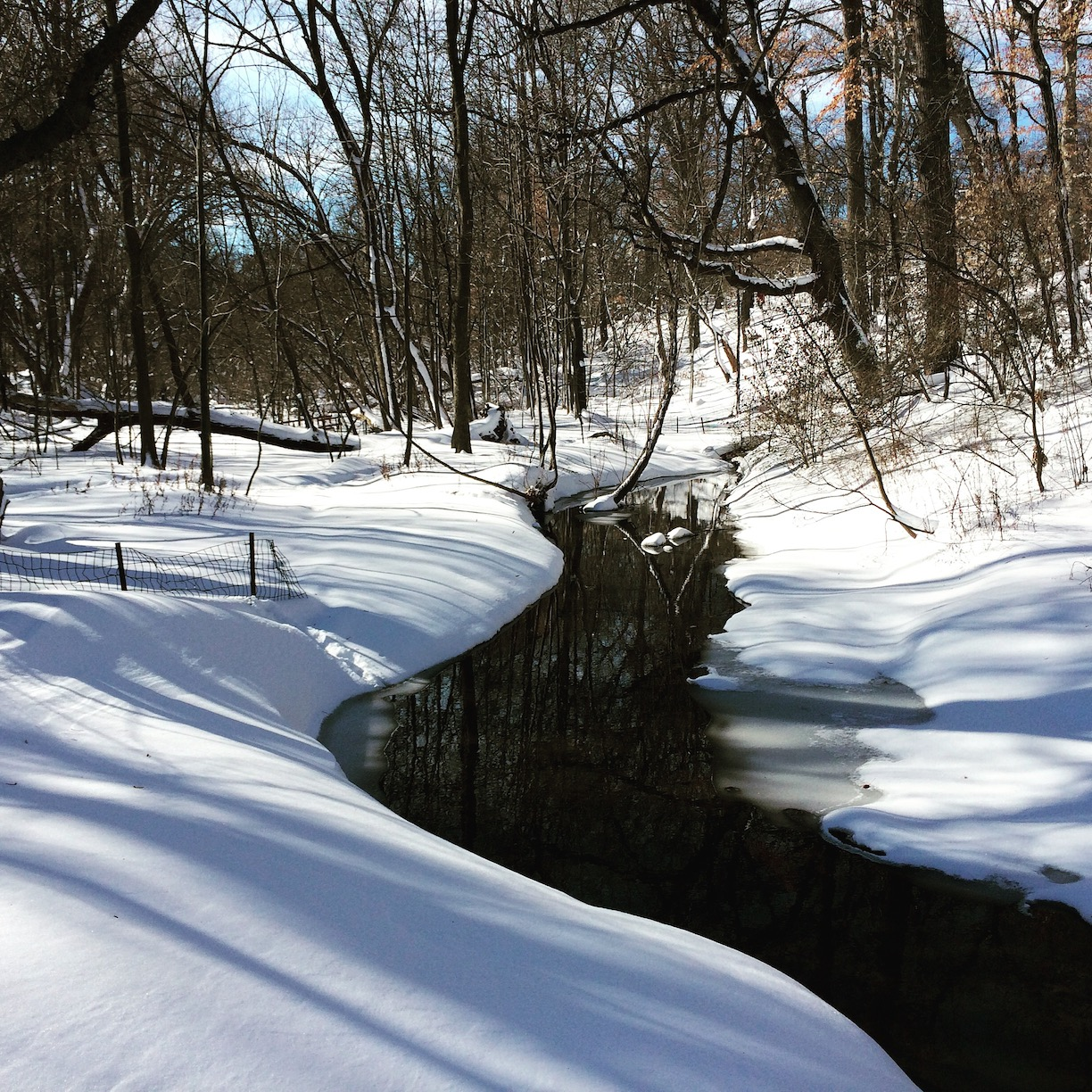 River in the North Woods