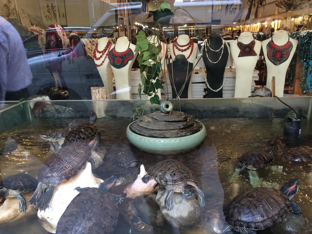 Red Ear Turtles