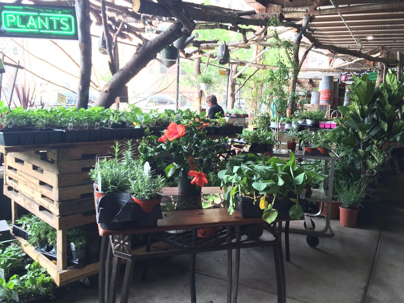 Tag: Urban Garden Center