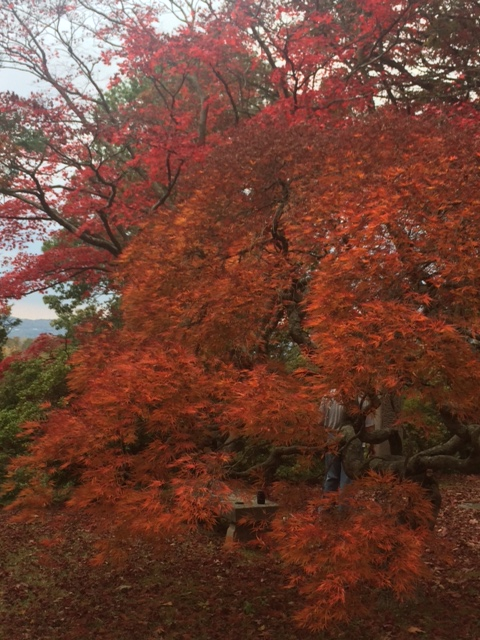 falls-leaves-at-sleepy-hollow-cemetery