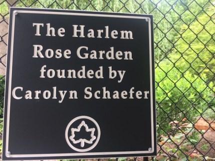 Harlem Rose Garden founded by Carolyn Schaefer