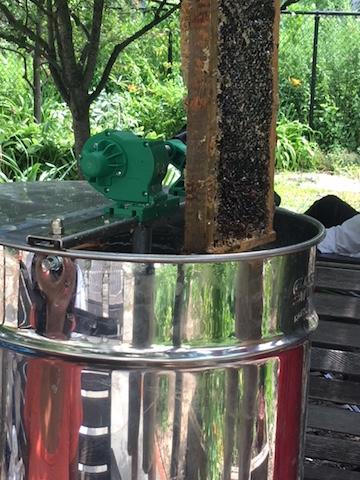 Extracting Honey in New York City