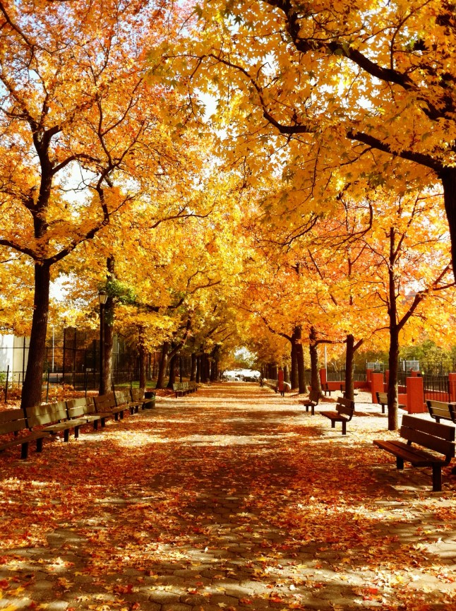 Autumn Leaves in New York City