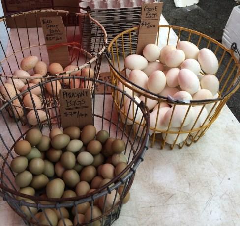 Wild Turkey Goose and Phesant Eggs