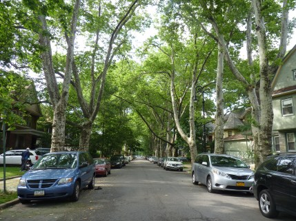 Tree Lined Streets 2