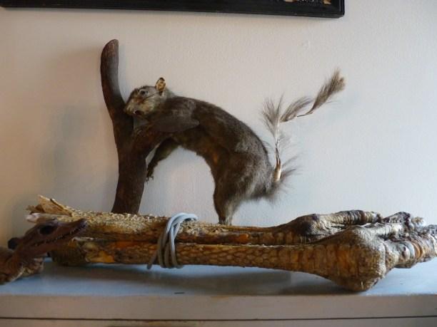 Morbid Anatomy Museum Squirrel