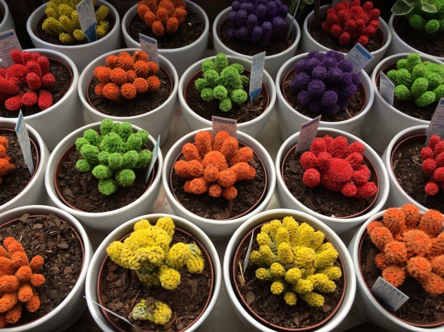 Cacti at the Urban Garden Center