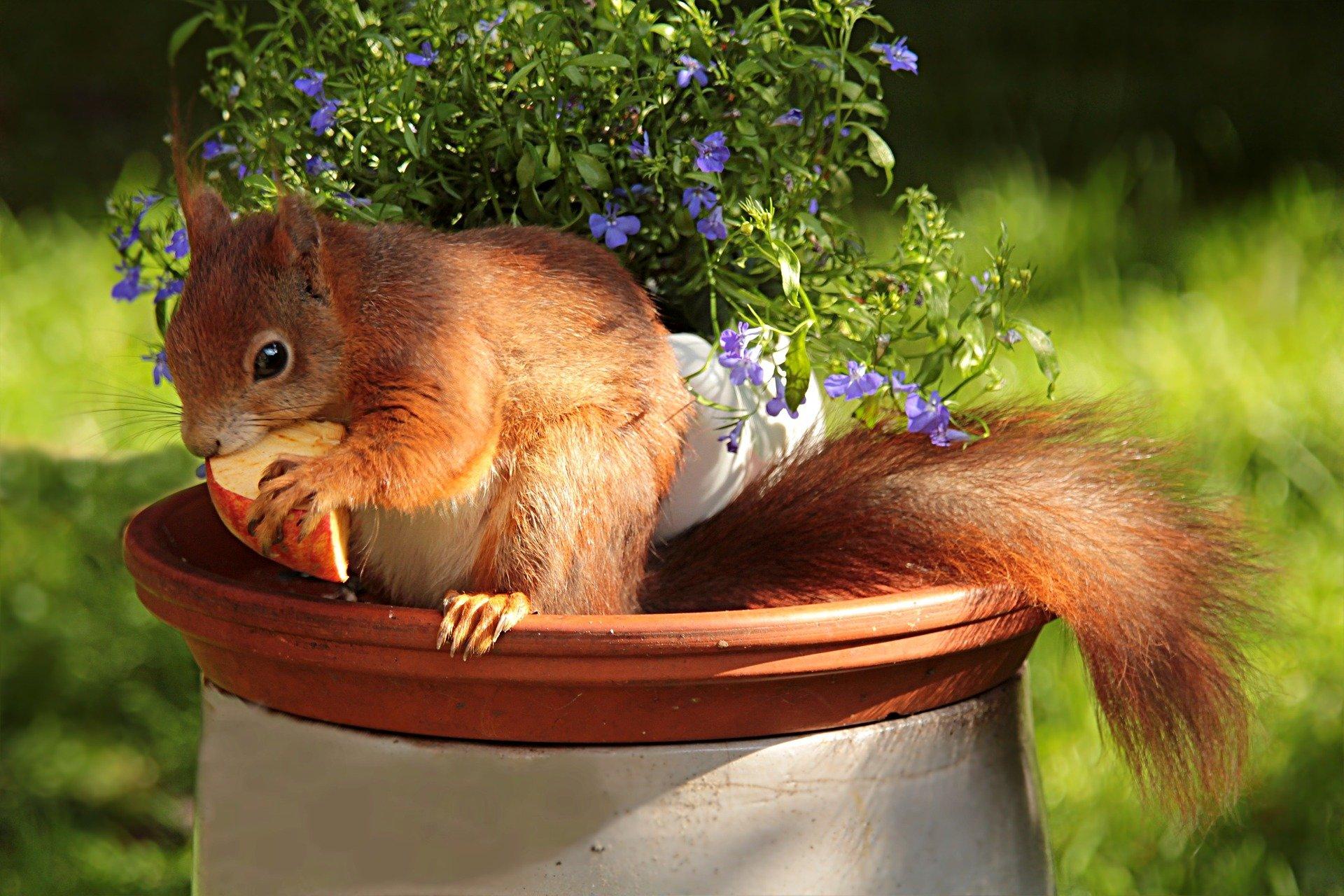 squirl