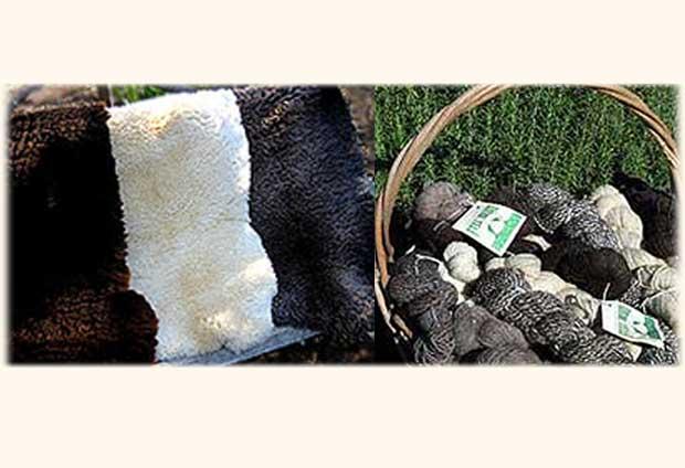 sheepskins_yarn