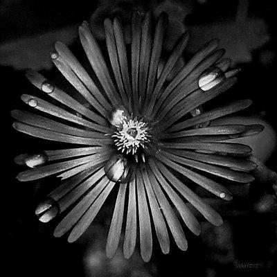 center_of_hope__by_sweetpandemonium90