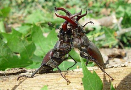 bugsfight