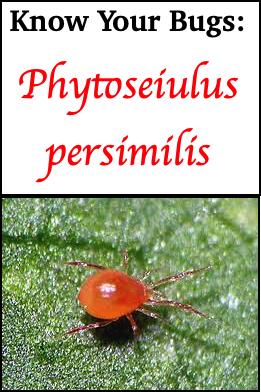 persimilis title