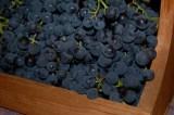 Price grapes