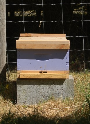 a homemade nuc hive for a captured swarm