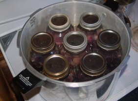 place jars in canner