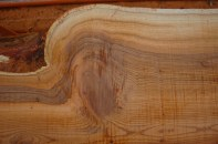 Pacific Yew- grain detail