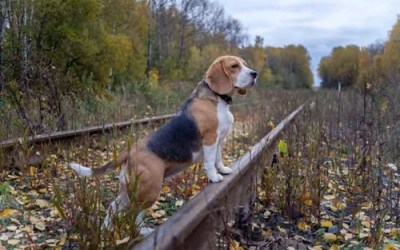 After the microchip – Pet GPS trackers