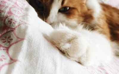 Cat Behavior Problems & Medications – Part 1