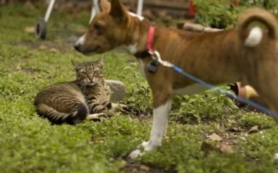 Dogs and Cats Are Amazing