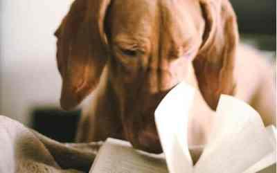 Recalls – Dog Food List 2018