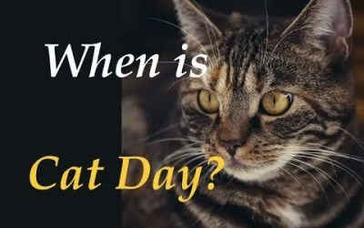 When is Cat Day?