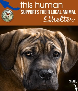 FCVC Dog Rescue & Shelter Appreciation Week Share Graphic