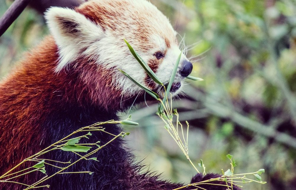 Panda Free Antivirus 2019 Crack