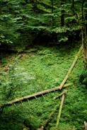 foresta vergine