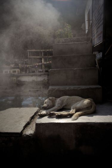 020 MANIKARAN hot spring and dog