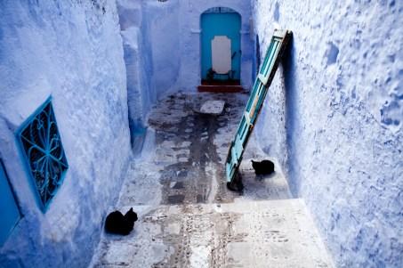 Chefchaouen * 2 black cats