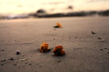 Ganga SUNSET* to Maria Gabriella :)