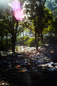 sun on the garbage