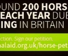 "Brian May,  ""Sadly, 100 horses have been killed on British racecourses this year"""