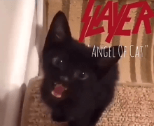 "Slayer ""Angel of Cat"""
