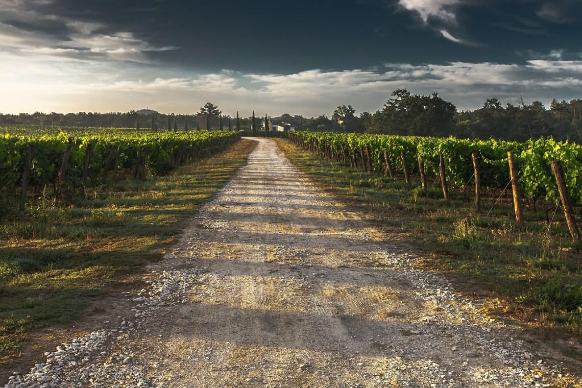 Tuscan Country Lane by AlohaMalakhov on Pixabay.